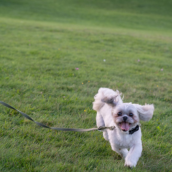 Photo sample of white dog running through grass